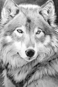 Фильмы про волков