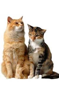 Интересные фильмы для котов